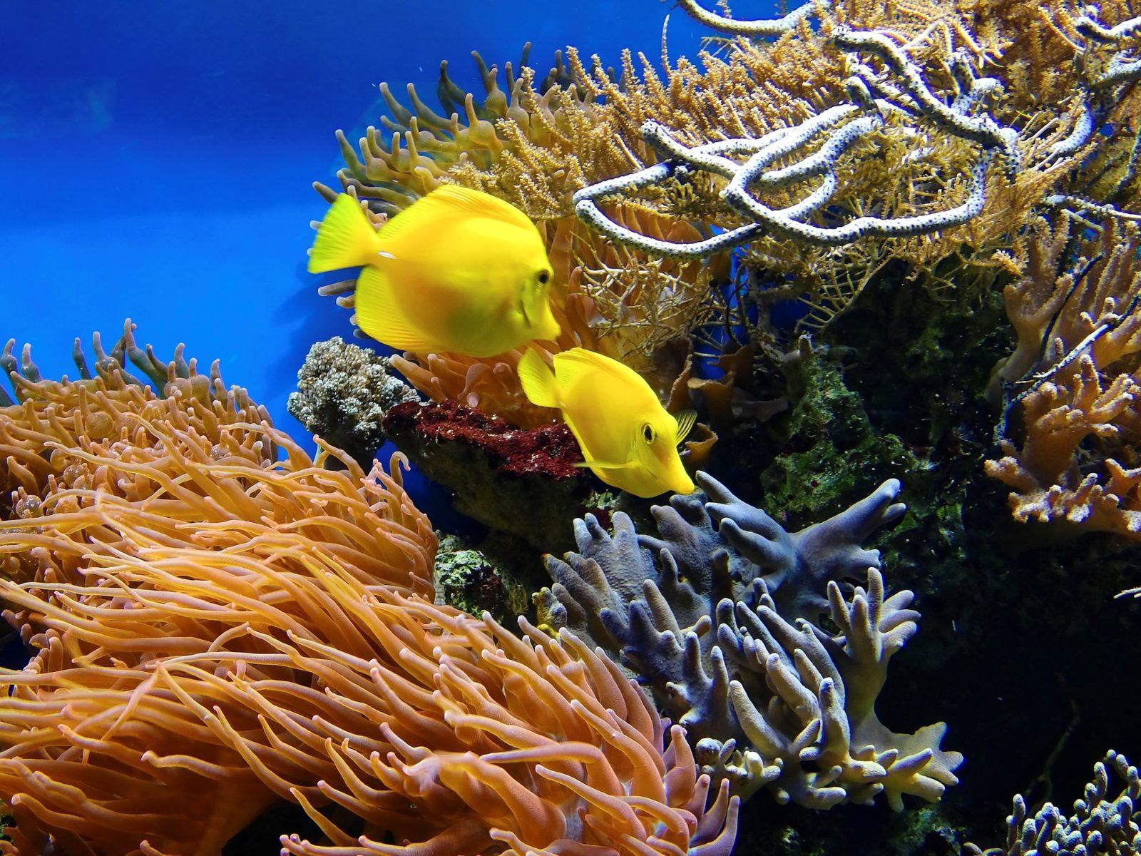 Шоколад февраля, рыбы коралловых рифов картинки с надписями